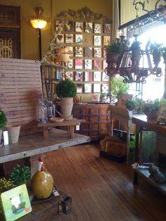ambrosia.. mckinney historical square, texas.