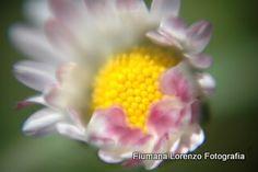 La Primavera,  http://fiumanalorenzo.blogspot.it/2014/04/la-primavera.html