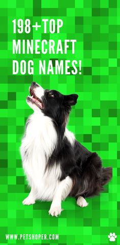 How do I name my dog in Minecraft? Every pet owner with a dog has the task of finding their canine ally a suitable pet name. Have you ever wondered if you could name your tamed wolf in Minecraft? If your answer is yes, you should know that naming your dog could factor in something you love, your dog's character, or its appearance. You as a player should find a name for your tamed wolf in Minecraft in the same trend. #TopMinecraftDogNames #MinecraftDogNames #DogNames Cool Female Dog Names, Cute Girl Dog Names, Top Dog Names, Best Dog Names, Puppy Names, Pet Names, Minecraft Dogs, Wolf Poses, Best Dogs For Families