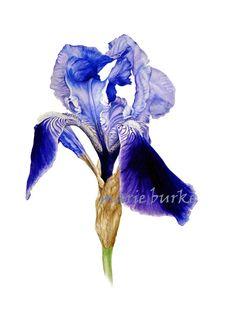 Iris - fine art botanical print, Iris watercolour, Iris print, flower print