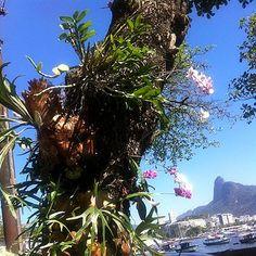Orquídeas e Chifre-de-veado. Foto de Shirlei Danon