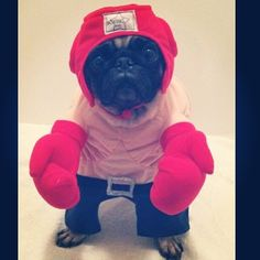 Funny Pug Costumes - DopePicz