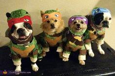 Ninja Turtle Dogs - 2015 Halloween Costume Contest via @costume_works