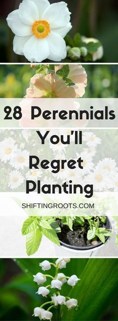 Perennials are the best investments of your garden. Plant once and reap the benefits for years! However, there are lots of invasive flowers that can turn into a gardeners worst nightmare. #garden #gardening #perennials #overgrown #flowers #planting