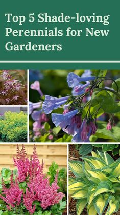 Plants That Love Shade, Shade Garden Plants, Flowering Shade Plants, Cool Plants, Annual Flowers For Shade, Shade Loving Flowers, Shaded Garden, Flowering Trees, Shade Landscaping