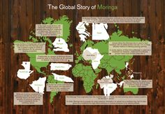 http://www.treesforlife.org/our-work/our-initiatives/moringa