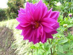 Una flor, una expresión!