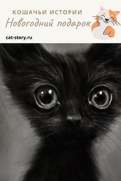 Новогодний подарок — Кошачьи истории Cats, Animals, Gatos, Animales, Animaux, Animal, Cat, Animais, Kitty