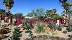 How To Get Started With Xeriscaping