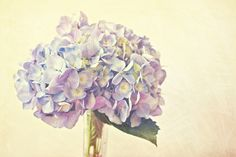 Violet Chic Art Print by Tracey Krick Photography | Society6