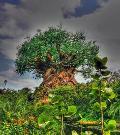 According to the caption: It's a mystical tree in India or Africa. The truth: It's a fake tree at Animal Kingdom at Disney World in Orlando, Florida.