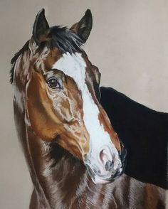 Lovely polo pony to have been commissioned to paint!   #equineart  #pastelportraits #art #fineart #commission #polopony #wintercoat #phonephoto 😲