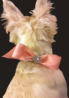 Dog Collar Bling - Rhinestone/Pearl Velcro Bow. $10.50, via Etsy.