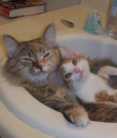 Isn't this cute?  And they're in a sink!   11 Mother Cats Snuggling Their Kittens