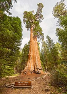 Kings Canyon Camping (Epic Guide) 6 Campgrounds, 5 Hikes, Weather  #camping #nationalparks #nationalpark #kingscanyon #generalgrant