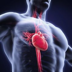 Cardiac Risk Factors Heart disease remains in the number one killer in the United States. Heart disease claims deaths, or 1 in every 4 deaths each Heart Disease Treatment, Protect Your Heart, Heart Muscle, Lower Your Cholesterol, Cholesterol Levels, Eroge, Heart Failure, Medical News, Heart Health