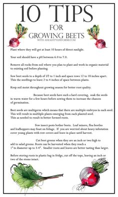 Check out my 10 Tips for Growing Beets to help you have the best harvest possible.- A Healthy Life For Me