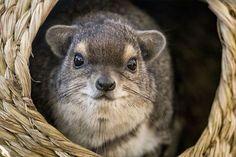 世界で最も可愛い動物・生物(ランキングベスト50) | ailovei