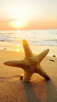 ↑↑TAP AND GET THE FREE APP! Art Creative Sea Water Hot Summer Beach Sand Coast Star HD iPhone 6 Wallpaper