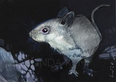 9764 Mouse - Considering the Maze x acrylic Paintings I Love, Animal Paintings, Animal Drawings, Oil Paintings, Beast, Watercolor, Maze, Artwork, Pastel