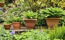 Small garden? Make the most of it