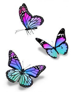 Purple Butterfly Tattoo, Butterfly Nail Art, Butterfly Drawing, Dragonfly Art, Butterfly Wallpaper, Butterfly Design, Dragonfly Drawing, Painted Rocks Craft, Popular Tattoos