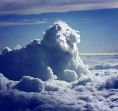 Lion in the clouds