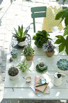 Pflanzen schmücken die Kaffeetafel im Garten #pflanzen #pflanzenfreude #plant #planters #sommer #summer