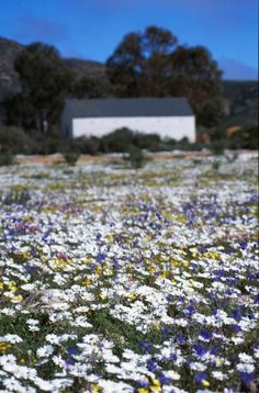 <b>Wild Flowers</b> in <b>South</b>…