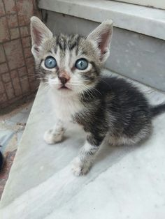 My beautiful and sweety cat