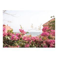 """Mi piace"": 3,146, commenti: 37 - Olivia Thébaut (@oliviathebaut) su Instagram: ""Colors of Gorée"""