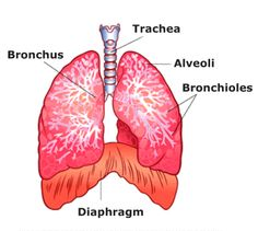 Definition of Chronic Obstructive Pulmonary Disease (COPD): it is also know as Chronic Obstructive Lung Disease Caused by Smoking, Air Pollution & Genetics.