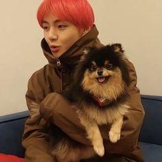Vs Vlive with tannie 181206 Bts Bangtan Boy, Bts Boys, Bts Korea, V Taehyung, Baby Dogs, Doggies, Foto Bts, Beautiful Dogs, Bts Memes