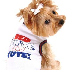 3 Cheers for the Red,White & Blue! Hip Hip Hooray!  Daisey's Doggie Chic