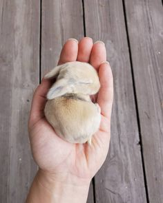 There's nothing better than seeing photos of cute animals. Check out these cute and beautiful photos of 20 sleeping animals! Cute Funny Animals, Cute Baby Animals, Funny Cute, Small Rabbit, Pet Rabbit, Large Rabbits, Sleeping Animals, Love Pet, Pet Portraits