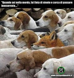 A selection of funny dog pics and photos showing the funny side of dogs and dog ownership. Laugh out loud dog humour. Funny Animal Pictures, Funny Animals, Cute Animals, Funny Dogs, Dumb Dogs, Funny Motivational Pictures, Funny Quotes, Photo Humour, Photo Animaliere