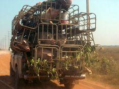Cambodia, deluxe pig transport
