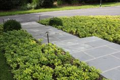 New front entry with bluestone steps in random rectangular pattern. Boxwood and pachysandra   By JHLA / Jennifer Horn Landscape Architecture
