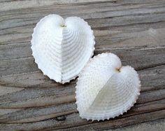 Wonderful Seashells, Beautiful Sea Shells, Spectacular Seashells, Shells Pin, Shells I Ve, Lace Shells, White Shells, Seashells Corculum, Seashells Florida