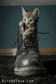 ...A soldier's kitty. ❤