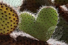 Cactus heart...sometimes its a prickly kind of love