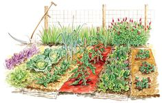 Get the Most From Vegetable Garden Mulches - Organic Gardening - MOTHER EARTH NEWS