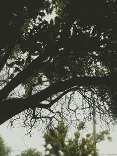 Rainy days. ✿  ✿