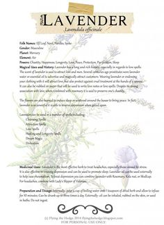 Lavender magical and medicinal uses