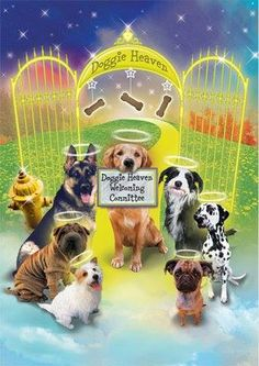 Dogs in heaven Pet Loss Grief, Loss Of Dog, Animals And Pets, Cute Animals, Dachshund, Pet Remembrance, Dog Heaven, Dog Facts, Dog Memorial