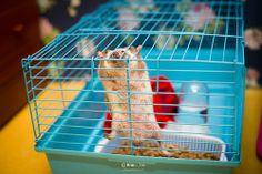 Let me out! #hedgehog