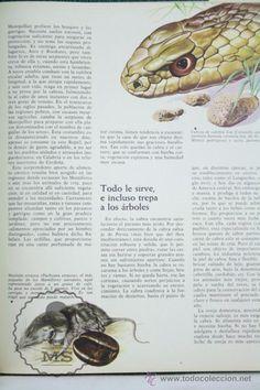 Libros de segunda mano: Libro Naturalia. Enciclopedia Ecológica Ciencias Naturales. Vol IV. Fauna Montañas... - Codex,1965 - Foto 3 - 50515400