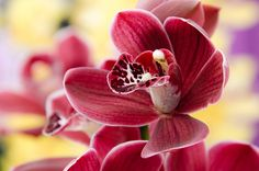 Exotic Orchid by Brendan Dias on 500px