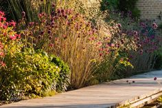Monarda, Stippa, Allium en Asters langs vlonderpad in landschappelijke poldertuin te Ouderkerk aan den IJssel. Tuinontwerp: De Tuinregisseurs