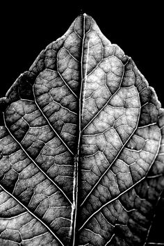 A black and white close up of a leaf